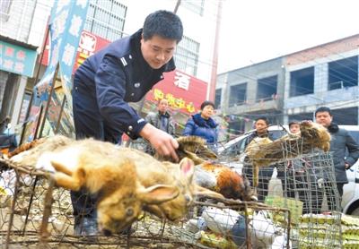 我市开展打击破坏野生动物资源违法犯罪集中行动