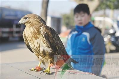 野生动物保护协会工作人员表示