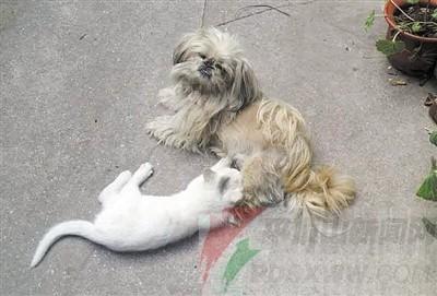 两只小动物一前一后在院子里转悠,狗摇尾巴扫到猫脸,猫也不躲闪.
